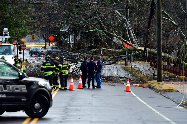 2/7/2020 Mike Orazzi | Staff The driver of an SUV was able to drive away after a large tree fell on Stafford Avenue Friday afternoon. A crew from Eversource was on scene and the road is expected to be closed for the remainder of the day.