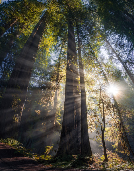 19-12-31 redwoods 0012-432-HDR-Pano-1107.jpg