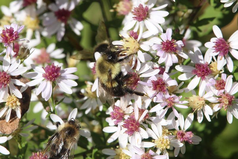 bee flower 4.jpg