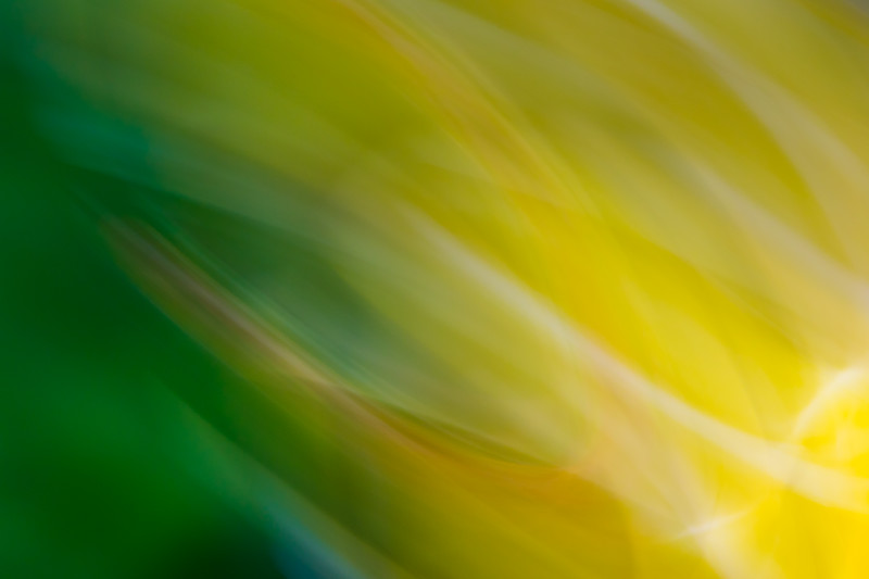 Bright yellows and greens from flowers and nature are abstracted and swirled in an active pattern