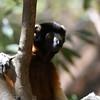 Madagascar 2017 (50)