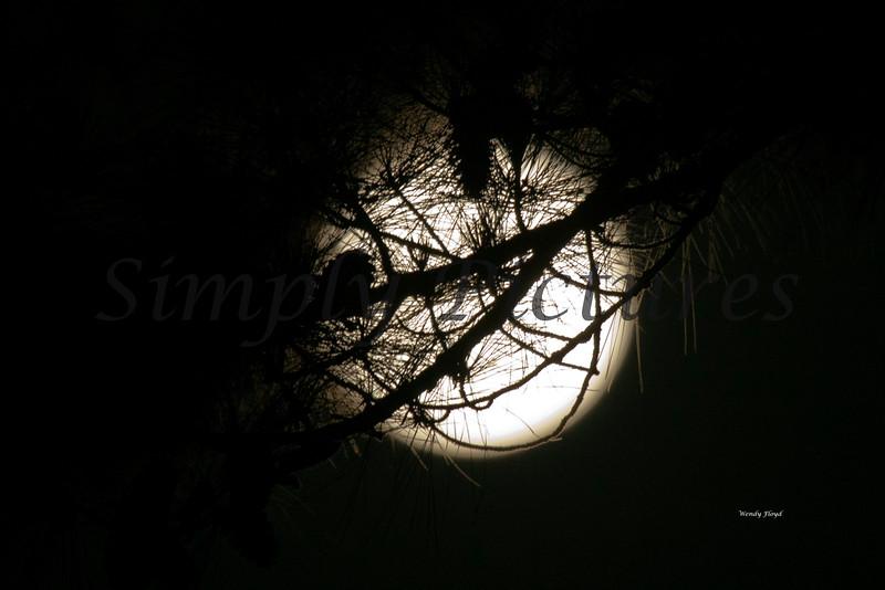 Moon017
