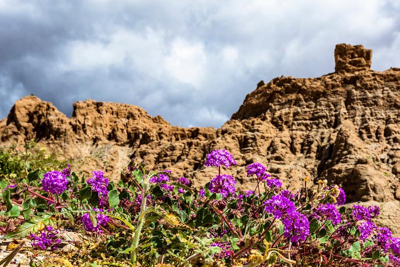 Badass Borrego Badlands and Beautiful Blooms