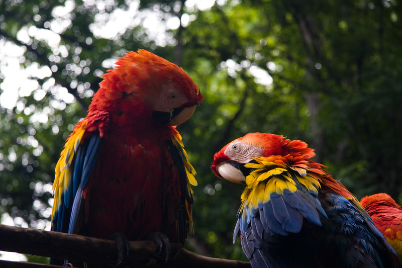 pretty-birds-at-the-ruins_4657973251_o.jpg