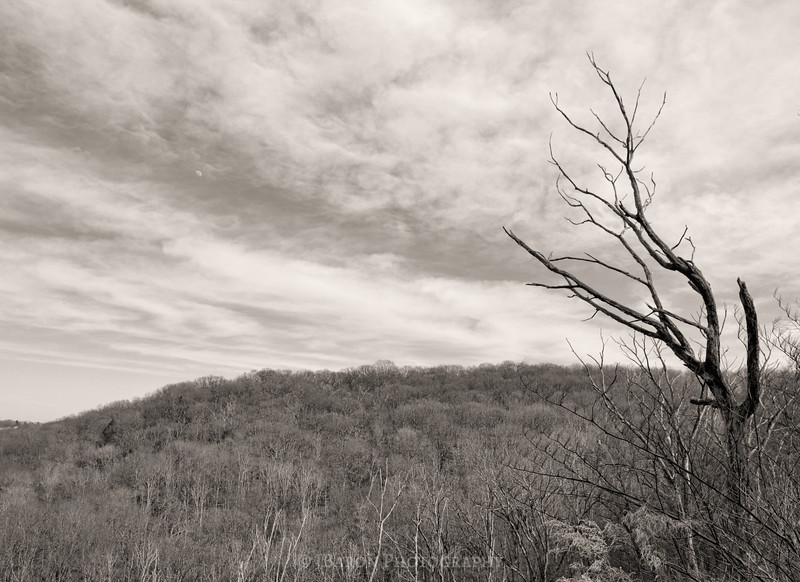 Hill of Bare Trees