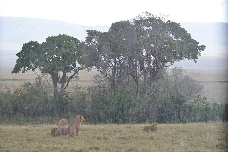 East Africa Safari 444.jpg