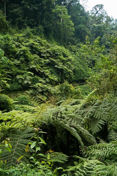 Nyugwe-Rwanda-28.jpg