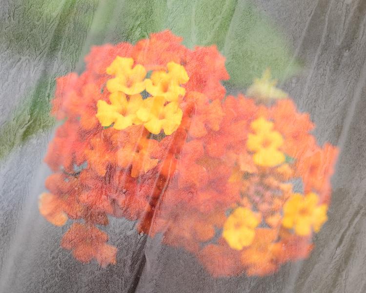 under-glass-s2020-08.jpg