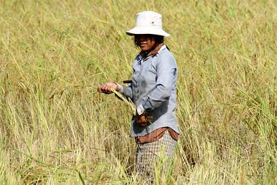Rice Field and Silk Farm 16.Nov, 08