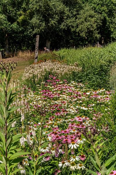 Sussex Prairie Gardens-0294.jpg