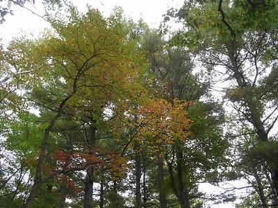 fall foliage 2004