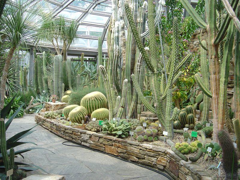 800px-Botanical_Garden_Berlin_-_Cacti_House.jpg