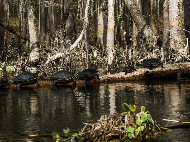 02-23-2019 Ichetucknee River kayak (49 of 78).jpg
