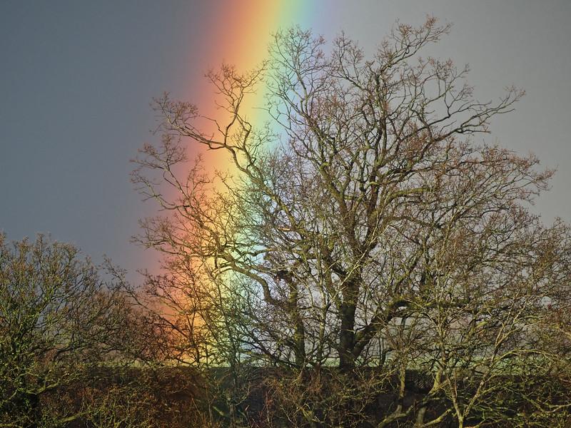Rainbow close up