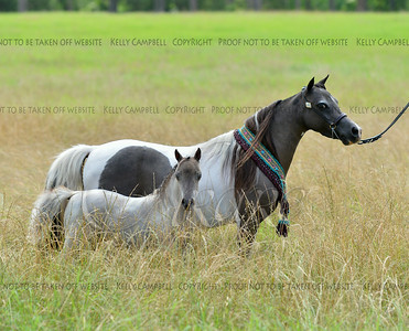 3-4. American honey with B&W mare