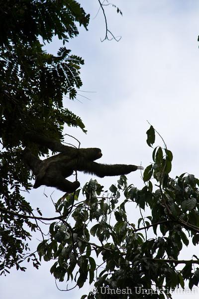 Costa Rica 073.jpg