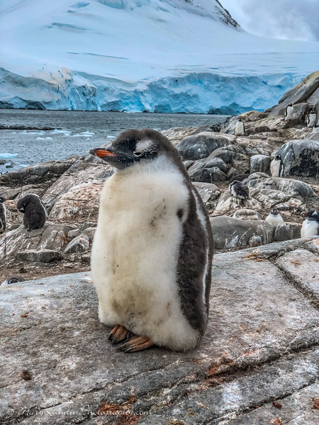 Antarctic-58