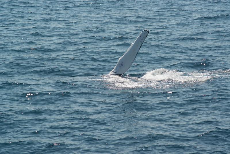 humpbacks-4107.jpg