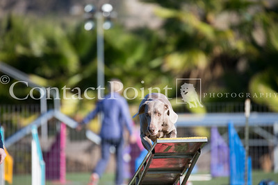 Contact Point AKC Agility - February 17, 2018
