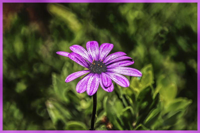 September 12 - Flower.jpg