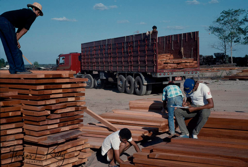 Wood planks being transported to the sity are of Brazil.For centuries the Amazonian forest has been a nourishing mother for theKayapo, who survive mostly on hunting, fishing and gathering. But with the high demand of log and self-indulgence of the leaders of Kayapo tribe, the rain forest is being deforested in a rapid way, which is causing global warming.  Kayapo, Brazilain Amazon.