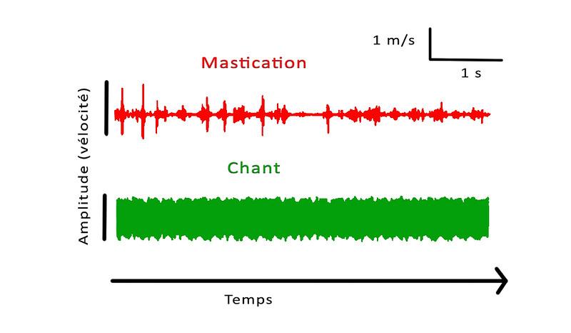 Variations d'amplitude.jpg