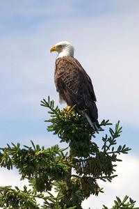 Nova Scotia Eagles, etc