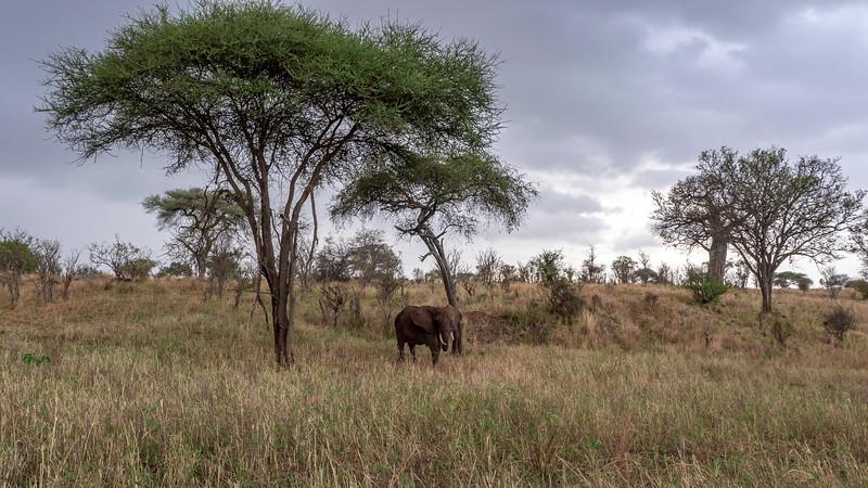Tanzania-Tarangire-National-Park-Safari-Elephant-07.jpg