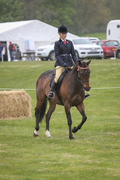 RoR - Ridden show horse class