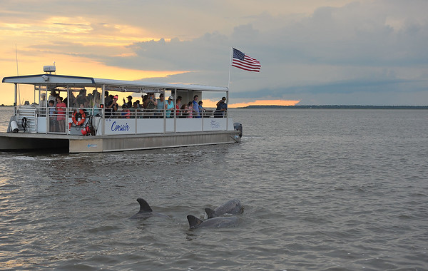 Jekyll Island Boat Tours Dolphin Daze Dolphin 06-20-20