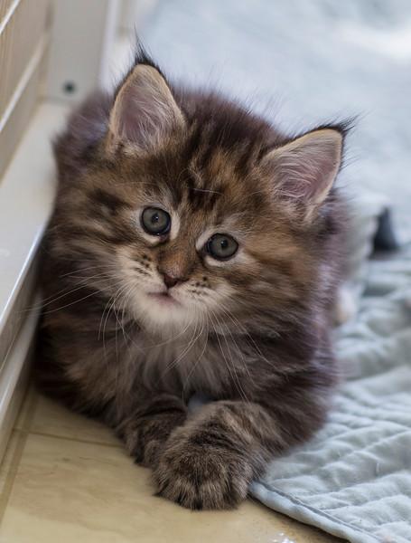 Kittens244.jpg