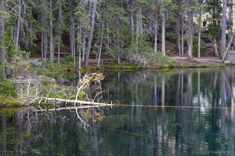 reflecting trees, Grassi Lakes