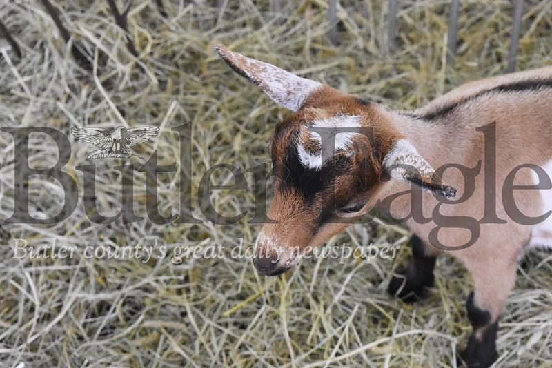 0711_LOC_BC Fair Goat.jpg