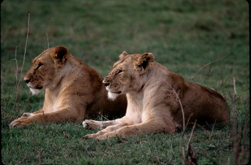 Kenya2_043.jpg