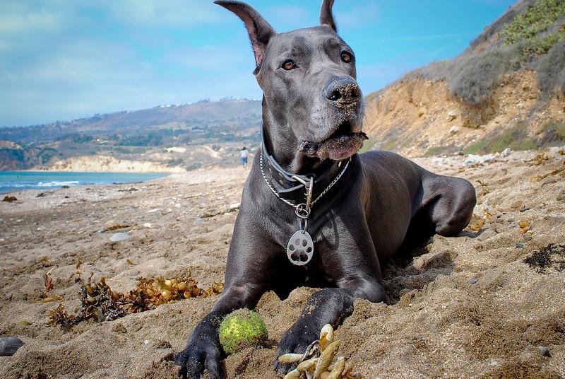 dogs_beach-089.jpg