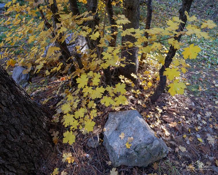Mt Lemmon Colors 10-26-2018g-.jpg