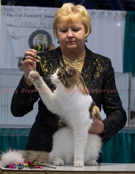 CatShow2014158.jpg
