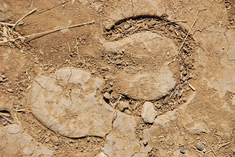 9/13/07 –We haven't had any real rain for ages so when I came across these horse shoe prints made at some point when this hiking trail was muddy, they caught my eye. There is one going into the mountains and one coming out – likely the same horse on the same day.