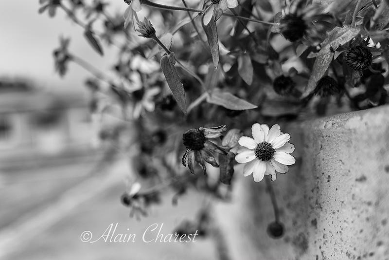 Fleur Fleur Fleur