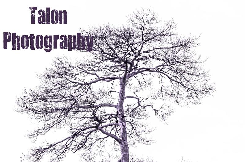 TP TREE.jpg