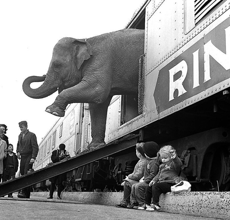 . A Ringling Brothers Circus elephant walks out of a train car as young children watch in the Bronx railroad yard in New York City, April 1, 1963.  The circus opens in Madison Square Garden April 3 for a 40-day engagement.  (AP Photo)