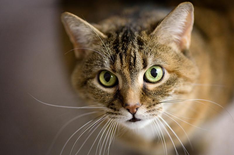 20081030_cats_041.JPG