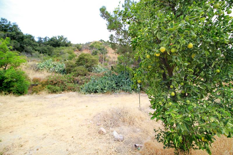32633-Trabuco-Canyon-Rd-Mitchell-East-Trabuco-Canyon_30.JPG
