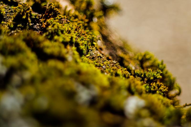 Moss on the Tree 5