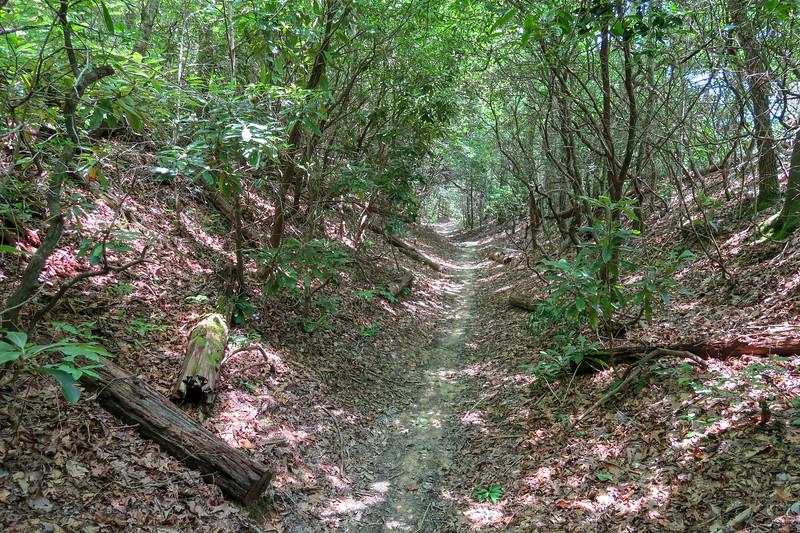 Buckhorn Gap Trail -- 3,320'