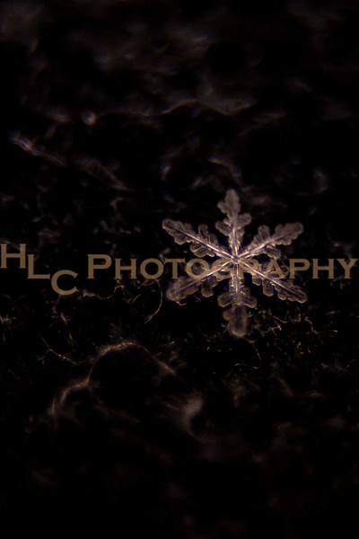 021919 Snowflakes