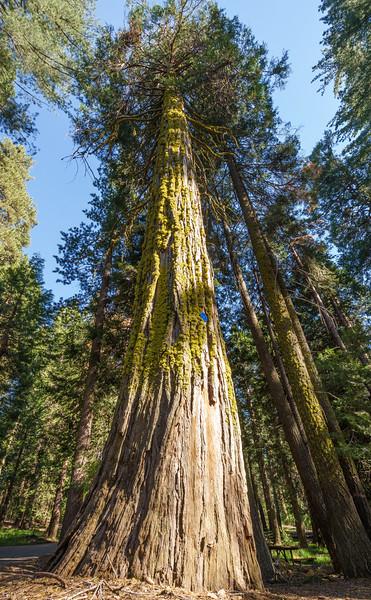 Sequoia -090616-121.jpg