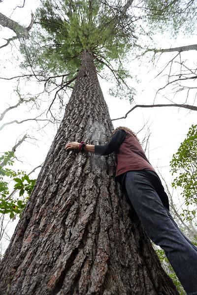 Robbin's tree