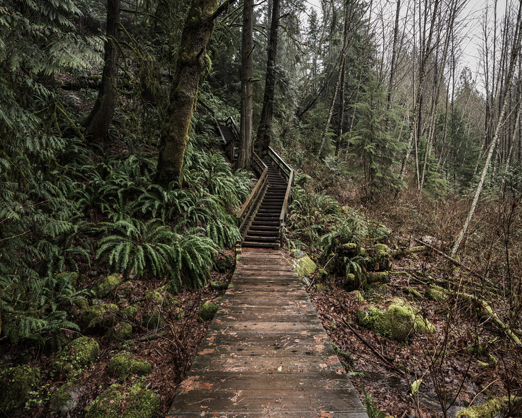 Lynn Canyon_Trail and Steps_HR_1-.jpg