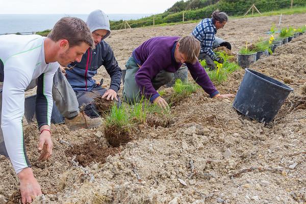 2019 - 05 - 02 - SJDL - TRANSFERT PLANTES PROTEGEES